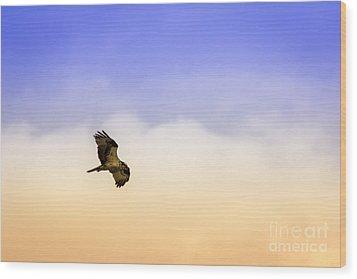 Hawk Over Head Wood Print