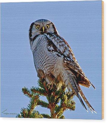 Hawk Owl Square Wood Print