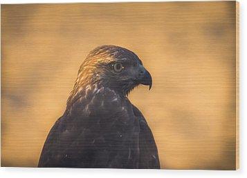 Hawk Profile Wood Print by Marc Crumpler