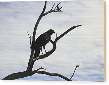 Hawk Silhouette 2 Wood Print