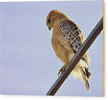 Wood Print featuring the photograph Hawkeye by AJ  Schibig