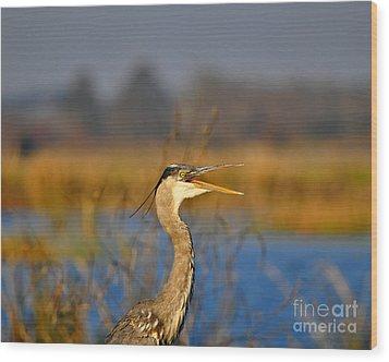Hawking Heron Wood Print by Al Powell Photography USA