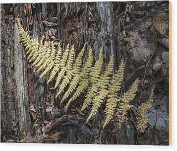 Wood Print featuring the photograph Hay-scented Fern by Andrew Pacheco