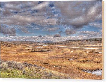 Hayden Valley Bison On Yellowstone River Wood Print