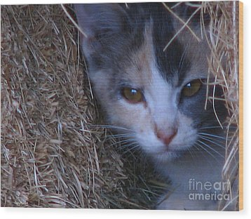 Haystack Cat Wood Print by Greg Patzer