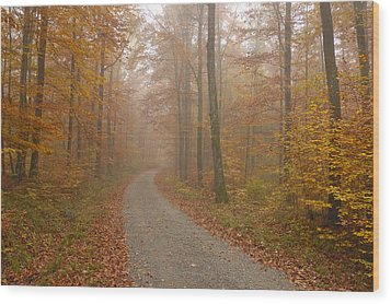 Hazy Forest In Autumn Wood Print by Matthias Hauser