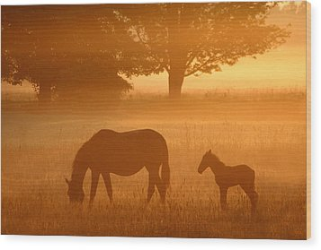 Hazy Morning II Wood Print