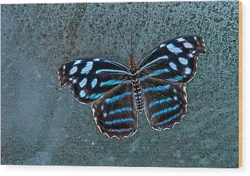 Hdr Butterfly Wood Print by Elaine Malott