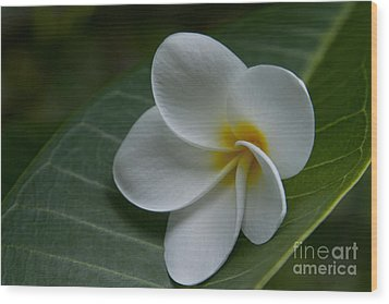 He Aloha No O Waianapanapa - White Tropical Plumeria - Maui Hawaii Wood Print by Sharon Mau