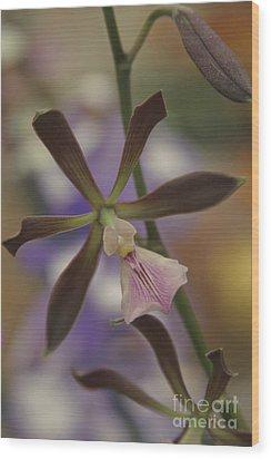 He Pua Ke Aloha - The Flower Of Love - Orchidea Tropicale Wood Print by Sharon Mau