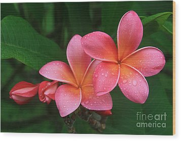 He Pua Laha Ole Hau Oli Hau Oli Oli Pua Melia Hae Maui Hawaii Tropical Plumeria Wood Print