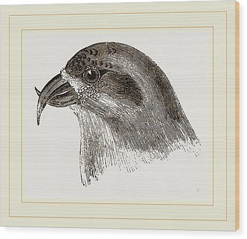 Head Of Crossbill Wood Print by Litz Collection