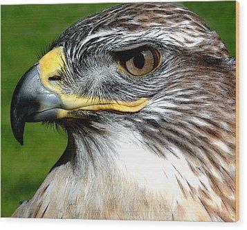 Head Portrait Of A Eagle Wood Print