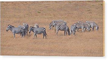 Hearst Castle Zebras Wood Print by Lynn Bauer