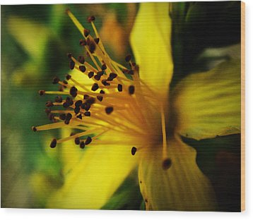 Wood Print featuring the photograph Heart Of A Flower by Zinvolle Art