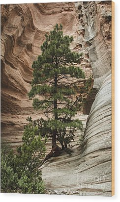 Heart Of The Canyon Wood Print by Terry Rowe