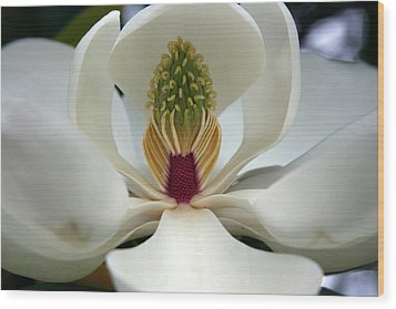 Wood Print featuring the photograph Heart Of The Magnolia by Andy Lawless
