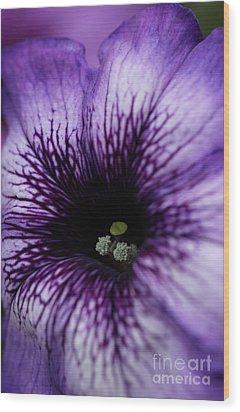Heart Of The Purple Petunia Wood Print
