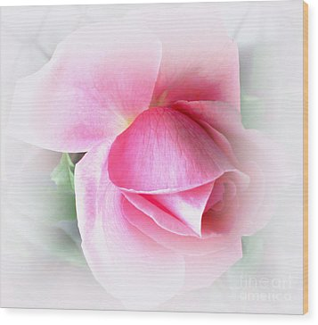 Heartfelt Pink Rose Wood Print by Judy Palkimas