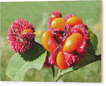 Hearts-a-bursting Seed Pods Wood Print by Duane McCullough