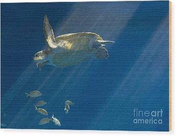 Heavenly Turtle Wood Print