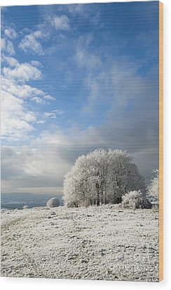 Heavy Frost Wood Print by Anne Gilbert