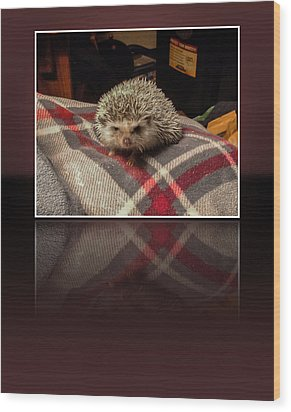 Hedgehog 5 Wood Print