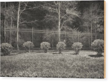 Hedges And Trees Wood Print by J Riley Johnson
