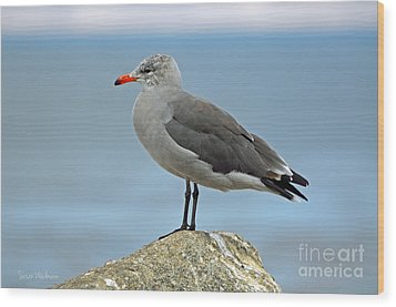 Heermann's Gull In Profile Wood Print