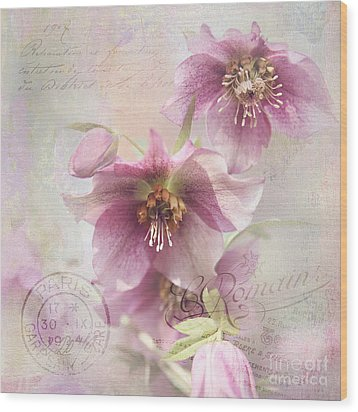 Wood Print featuring the photograph Hellebore by Sylvia Cook