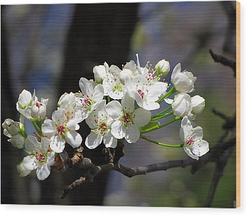 Wood Print featuring the photograph Hello Spring by Greg Simmons