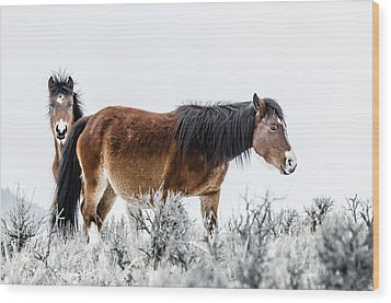 Hello Wood Print by Yeates Photography