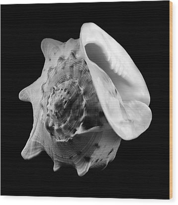 Helmet Shell Wood Print