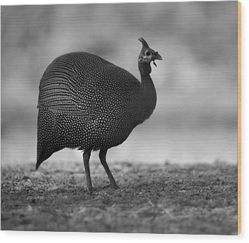 Helmeted Guineafowl Wood Print