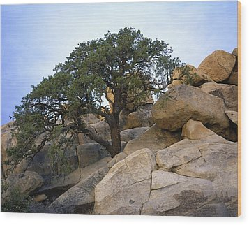 Hemingway Tree Wood Print