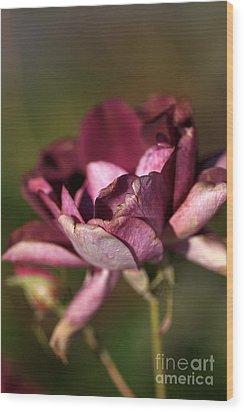 Her Beauty Of Age Wood Print by Joy Watson
