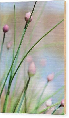 Herb Garden Wood Print by Kim Fearheiley