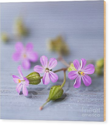 Herb Robert Wood Print