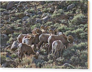 Herd Of Horns Wood Print by Jeremy Rhoades