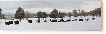 Herd Of Yaks Bos Grunniens On Snow Wood Print by Panoramic Images