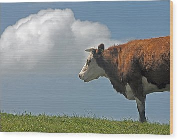 Wood Print featuring the photograph Hereford Cow by Dennis Cox WorldViews