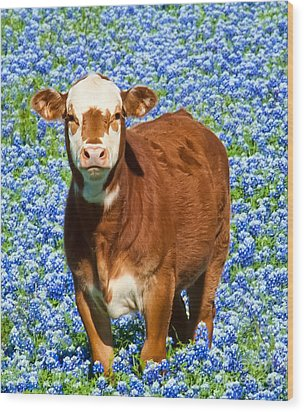 Wood Print featuring the photograph Heres Looking At You Kid - Calf With Bluebonnets In Texas by David Perry Lawrence