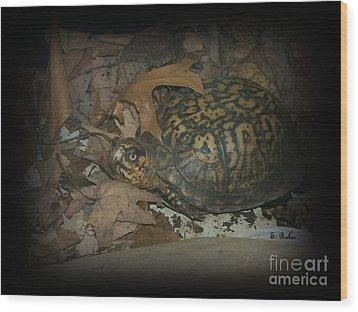 Wood Print featuring the photograph Here's Looking At You by Sara  Raber