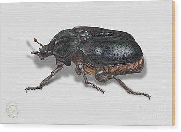 Hermit Beetle - Russian Leather Beetle - Osmoderma Eremita - Pique Prune - Erakkokuoriainen Wood Print by Urft Valley Art