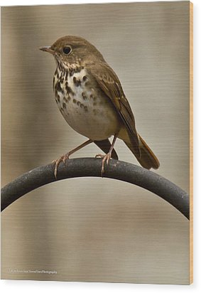 Wood Print featuring the photograph Hermit Thrush by Robert L Jackson