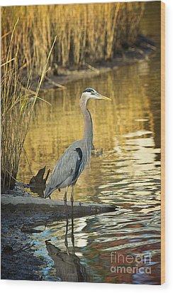 Heron Along The Bayou Wood Print by Joan McCool