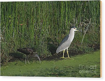 Heron And Ibis Wood Print
