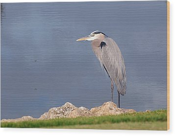 Heron And Pond Wood Print by Kenny Francis