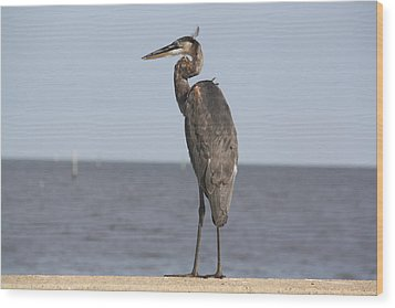Heron Wood Print by Donna G Smith