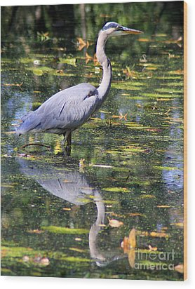 Wood Print featuring the photograph Heron Hunter by Kenny Glotfelty
